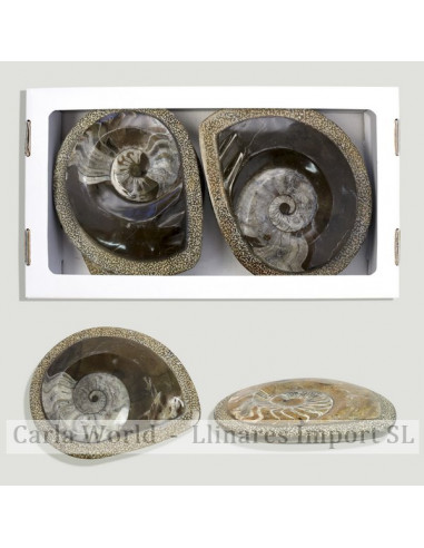 Ammonites polished matrix. Morocco. 14x11cm approx.