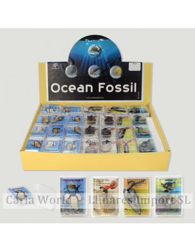 OCEAN FOSSIL. Boxes with Tooth shark/Ammonite/Orthocera/Goniatite